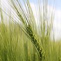 cooperativas agricolas